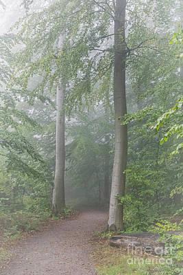 Basketball Patents - Foggy Morning Woodlands Path by Antony McAulay