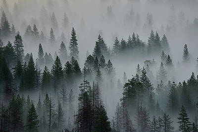 Photograph - Foggy Yosemite by Jon Glaser