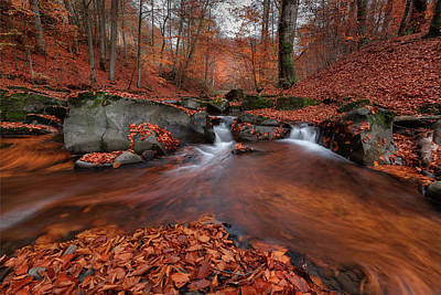 Photograph - Foliage Circulation In Nature by Vlad Sokolovsky