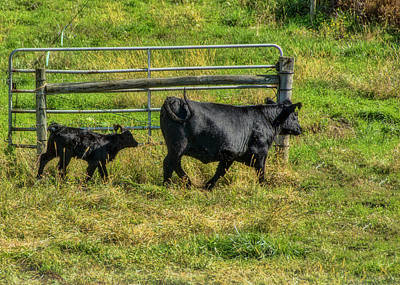 Photograph - Following Momma by Cathy Kovarik
