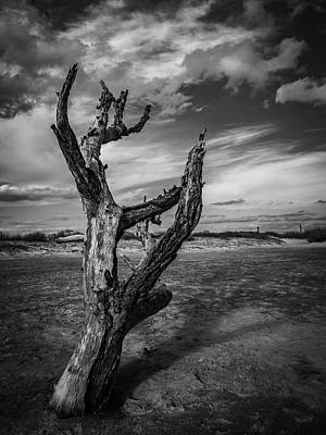 Photograph - Folly Beach Lonesome Tree by Donnie Whitaker