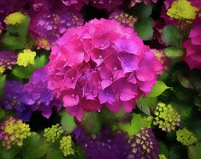 Photograph - For The Love Of Hydrangeas by Thom Zehrfeld