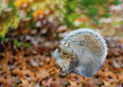 Photograph - Foraging Squirrel by Cathy Kovarik