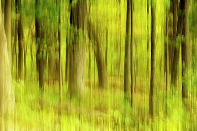 Photograph - Forest Abstract by Angie Tirado