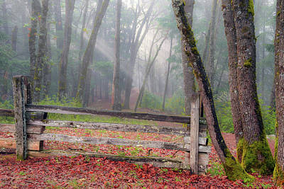 Photograph - Forest And Fence by Leland D Howard