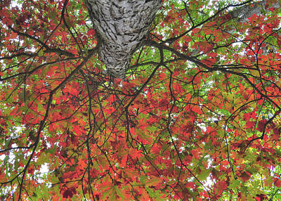 Photograph - Forest Canopy by JAMART Photography