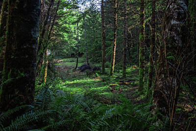Photograph - Forest Clearing by Bill Posner