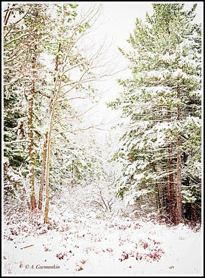Photograph - Forest Clearing In A Winter by A Gurmankin