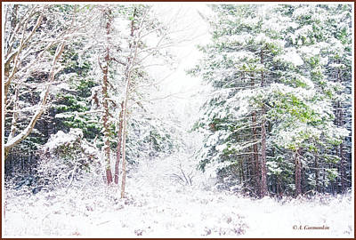Photograph - Forest Clearing In Winter by A Gurmankin