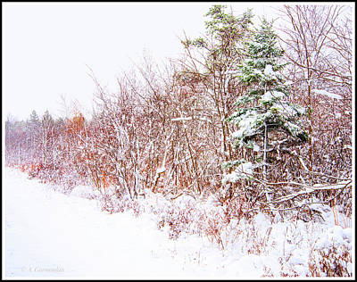 Photograph - Forest Edge Thicket In Winter by A Gurmankin