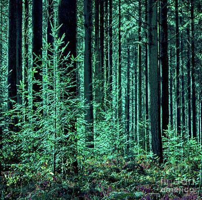 Digital Art - Forest Emerald by Corinne Carroll