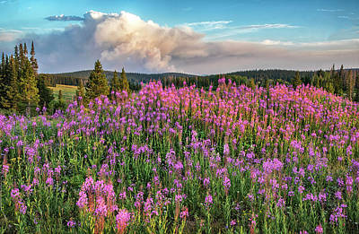 Photograph - Forest Fire And Blooming Lupine Near Steamboat Springs Colorado by Dave Dilli