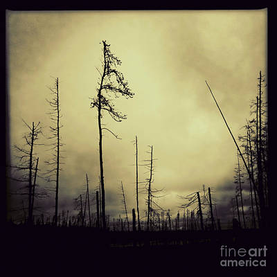 Photograph - Forest Fire by RicharD Murphy