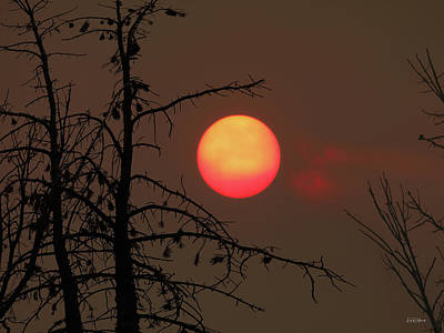 Photograph - Forest Fire Sunset by Leland D Howard