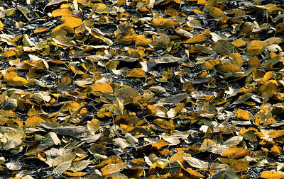 Photograph - Forest Floor by Edward Peterson