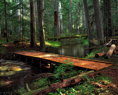 Photograph - Forest Foot Bridge by Leland D Howard
