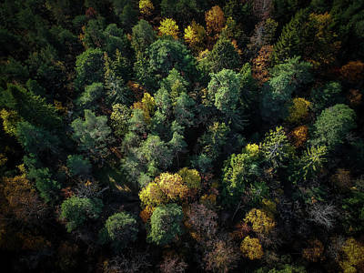 Fall Foliage Wall Art - Photograph - Forest Landscape - Aerial Photography by Nicklas Gustafsson