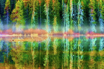 Photograph - Forest Mirrored  by Dee Browning