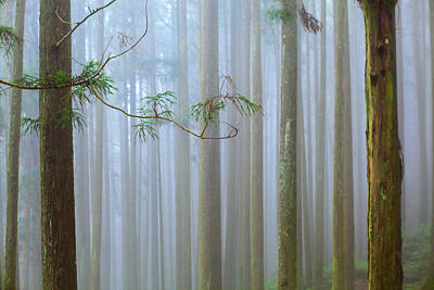 Branch Photograph - Forest Mist by Higrace Photo