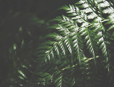 Kristian Gallagher Royalty-Free and Rights-Managed Images - Forest Mood by Kristian Gallagher