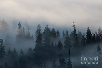 Photograph - Forest Morning Mist by Mike Dawson