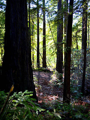 Photograph - Forest Mystery - Big Sur by Glenn McCarthy Art and Photography