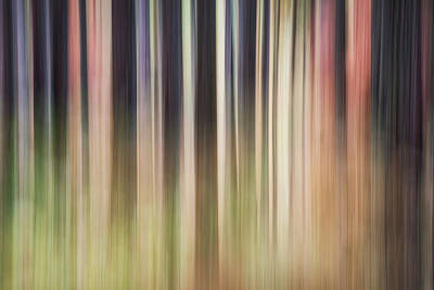 Photograph - Forest by Nicole Young