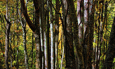 Photograph - Forest Shadows by HH Photography of Florida