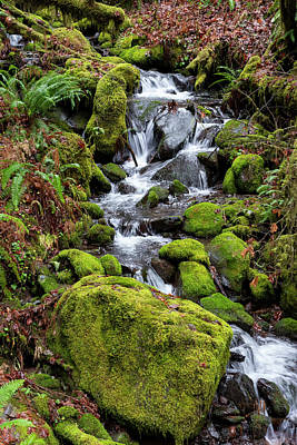 Photograph - Forest Stream by Steven Clark