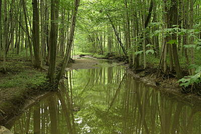 Photograph - Forest Stream by Strathroy