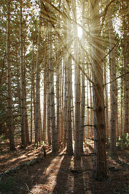 Photograph - Forest Sunburst by Patti Deters