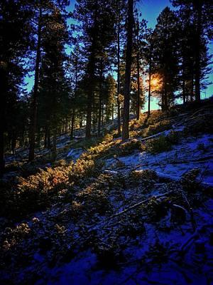 Photograph - Forest Sunrise by Dan Miller