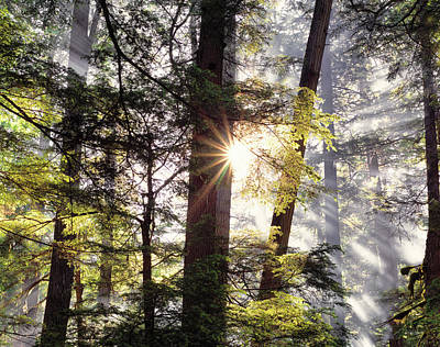 Photograph -  Forest Sunrise by Leland D Howard