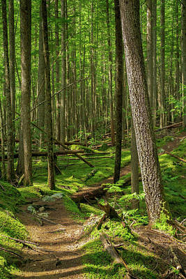 Photograph - Forest Trail by Dave Matchett