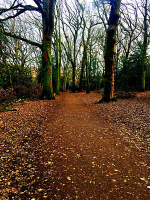 Photograph - Forest Trees In Highgate Woods 53 by Artist Dot