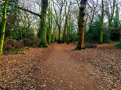 Photograph - Forest Trees In Highgate Woods 54 by Artist Dot