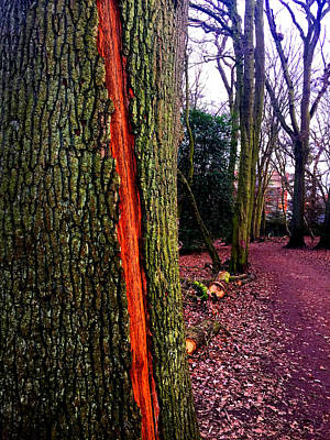 Photograph - Forest Trees In Highgate Woods 55 by Artist Dot