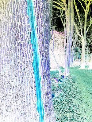 Photograph - Forest Trees In Highgate Woods 55a by Artist Dot