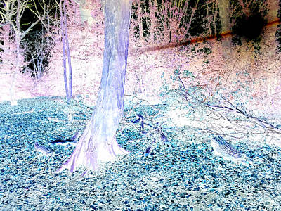 Photograph - Forest Trees In Highgate Woods 59a by Artist Dot