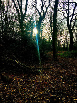 Photograph - Forest Trees In Highgate Woods 60 by Artist Dot