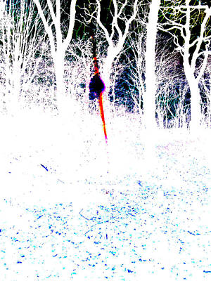 Photograph - Forest Trees In Highgate Woods 60b by Artist Dot