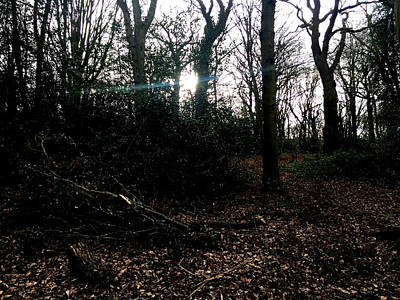 Photograph - Forest Trees In Highgate Woods 61 by Artist Dot