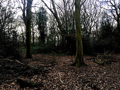 Photograph - Forest Trees In Highgate Woods 62 by Artist Dot