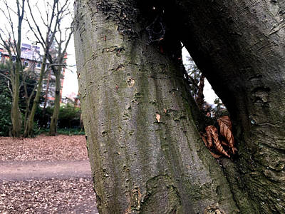 Photograph - Forest Trees In Highgate Woods 65 by Artist Dot