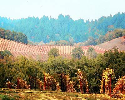 Photograph - Forestville Vineyards by Timothy Bulone