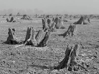Photograph - Forrest by Davor Zerjav