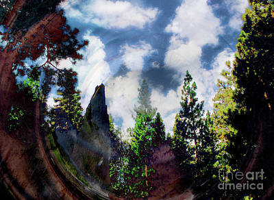 Travel - Forrest View by Katherine Erickson