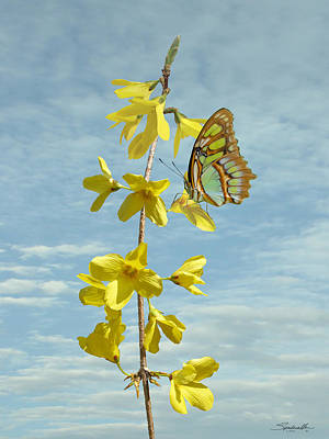 Digital Art - Forsythia And Butterfly by M Spadecaller