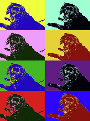 Photograph - Foster Dog Pop Art by Kathy K McClellan