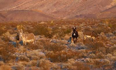 Photograph - Four Legged Wild Family by Sagittarius Viking